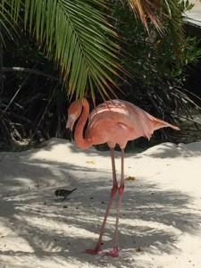 Tijdsverschil Aruba